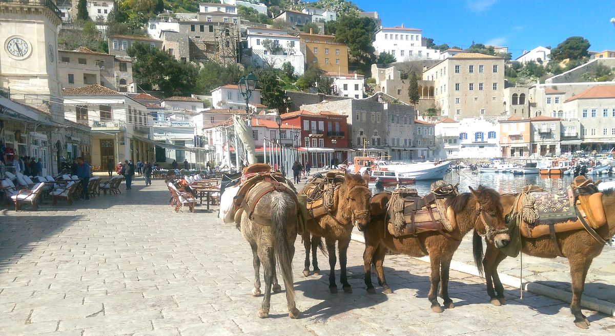 Donkeys in Hydra